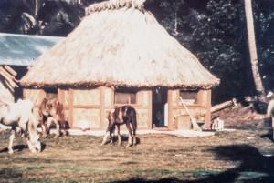 fijian-village