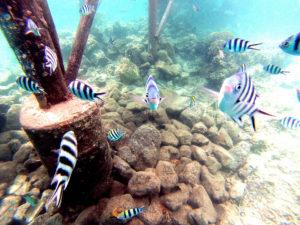 Swimming on a Fiji Holiday