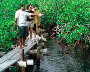 Travel to Fiji to Help Protect the Environment